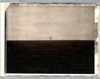 Dan Isaac Wallin - Eduard Planting Gallery