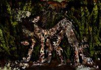 Dindi - Eduard Planting Gallery