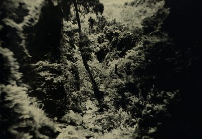 Erik Hijweege - Jungle Tintype - Eduard Planting Gallery
