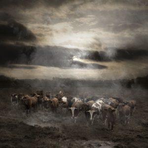 Eduard Planting Gallery - Saskia Boelsums - Landscape #51