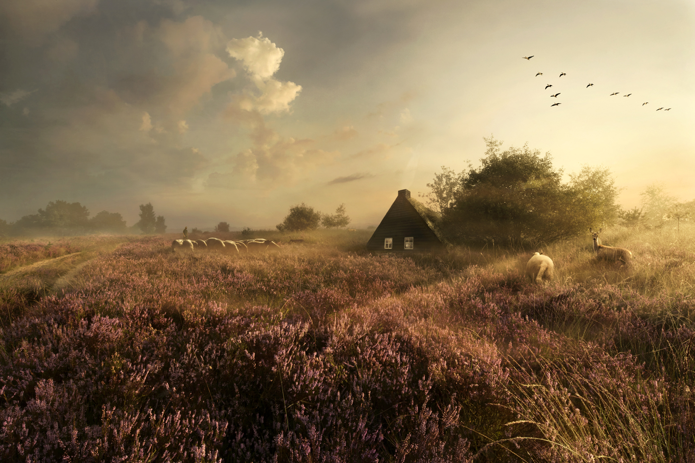 © Maartje Roos - Oude tijden herleven - Drentse Heide