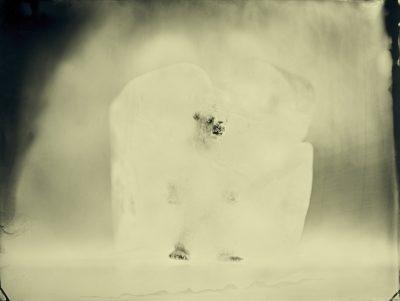 Erik Hijweege - Polar Bear - Eduard Planting Gallery