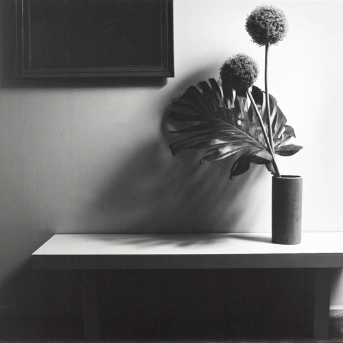 Robert Mapplethorpe - Eduard Planting Gallery