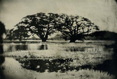 Erik Hijweege - Tissa Wewa Tintype - Eduard Planting Gallery