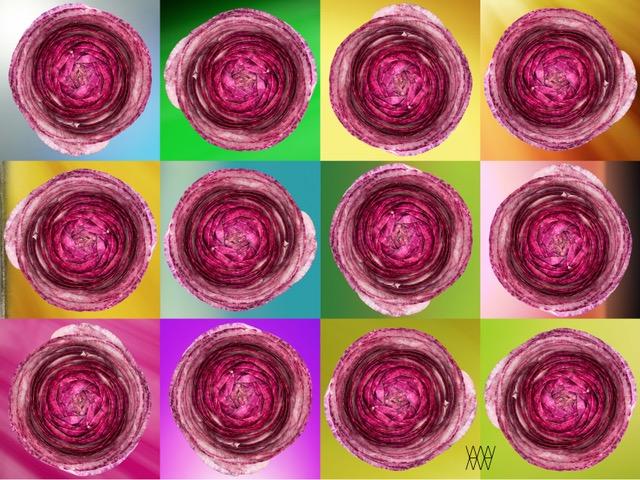 Miraculus ranunculus - Aleksander Willemse - Eduard Planting Gallery